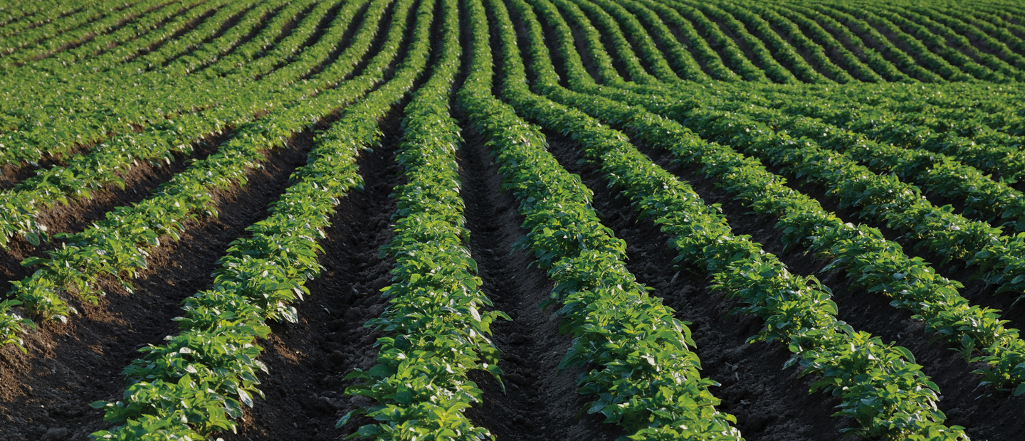 Precision irrigation for open field farms