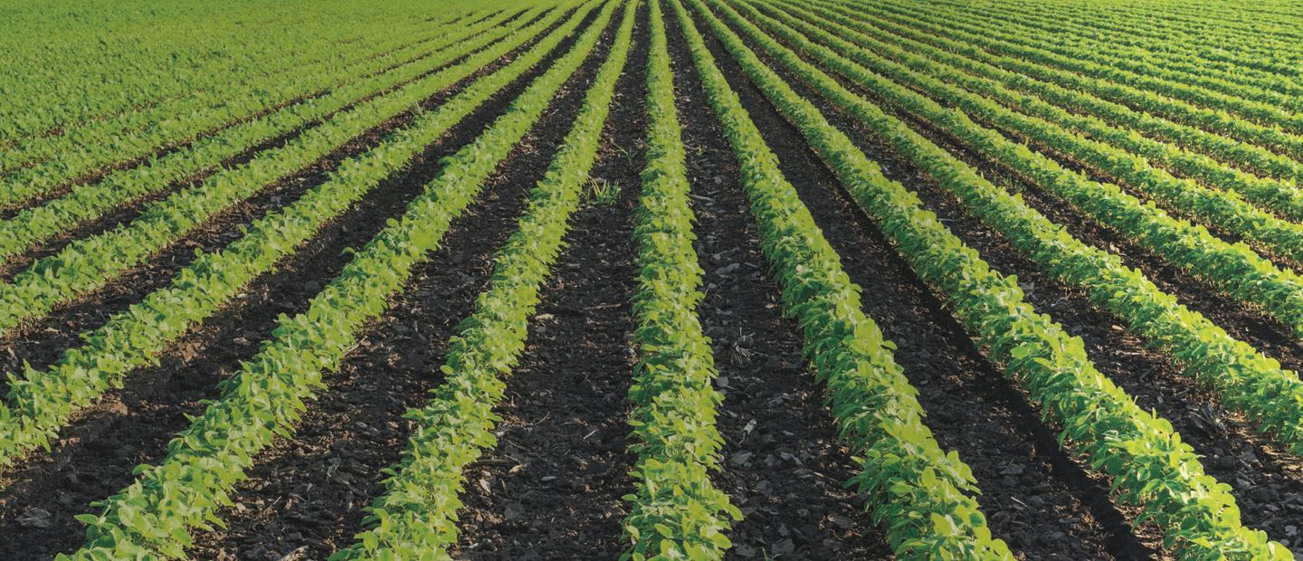 Precision irrigation solutions for row crops