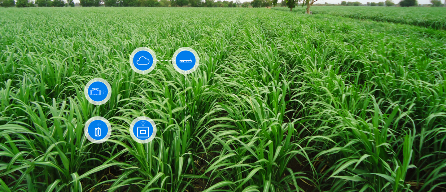 Open fields | Digital farming | Netafim