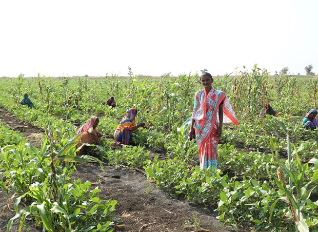 Netafim Chosen to Deploy Four Large Community Irrigation Projects Across India
