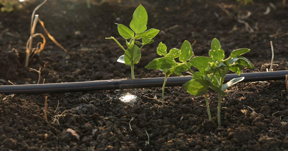The Future of Farming: Smart Community Irrigation Solutions